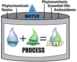 AMP Process